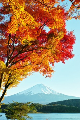 Mt. Fuji & Autumn Leaves
